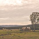 On the road to Taralga by Candy Jubb