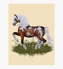Magnificent Stallion Photographic Print