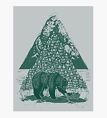 Teddy Bear Picnic Photographic Print