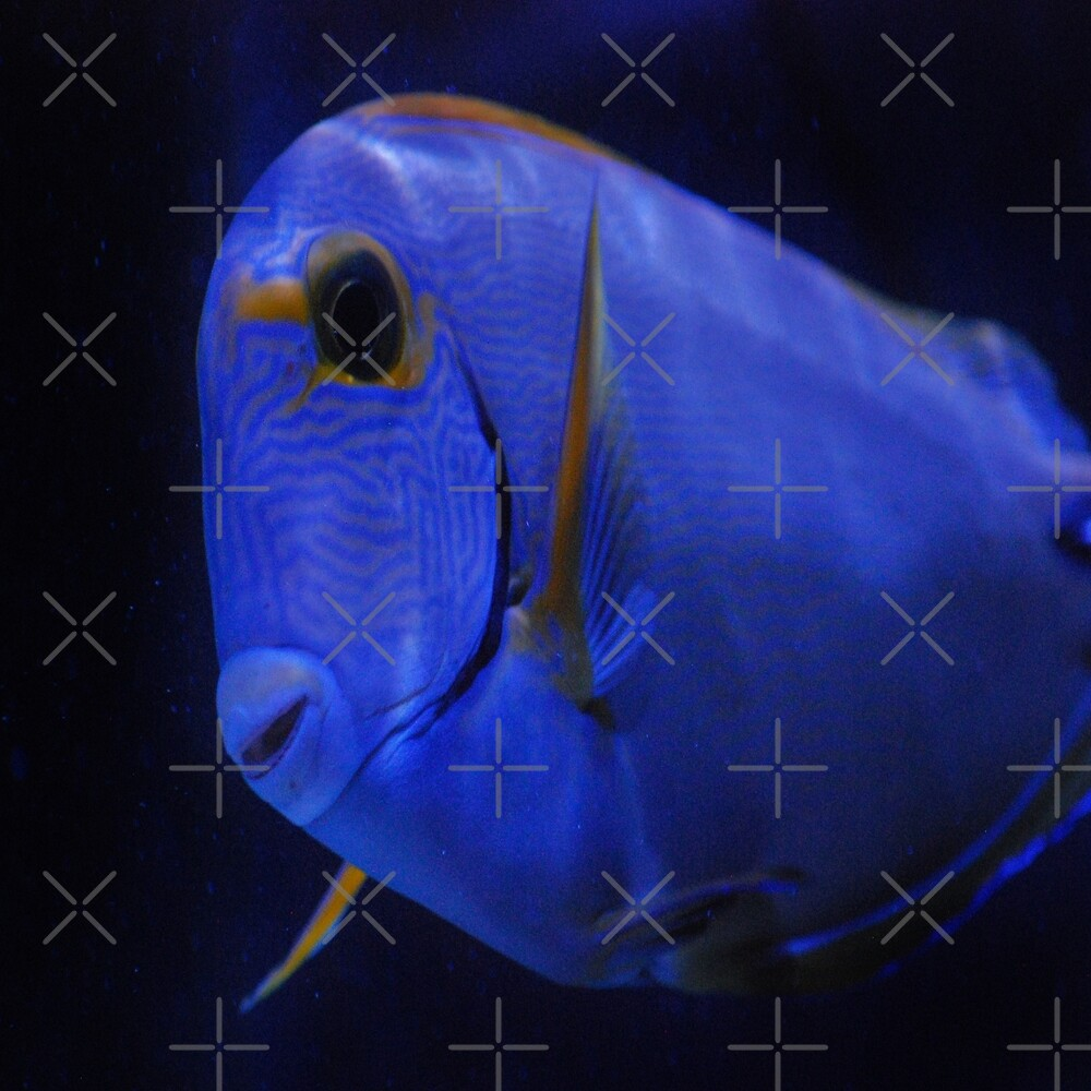 Blue Tang 3 by Gypsykiss