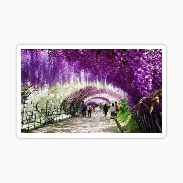 Ashikaga Flowering Park in Japan. Sticker