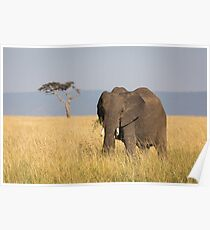 Elephant - Africa (12) Poster