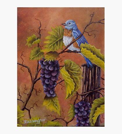 Bluey and the Grape Vine Photographic Print