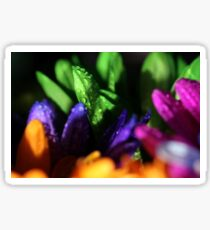 Macro Photo Collage of Colorful Flowers Sticker