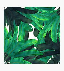tropic green  Photographic Print