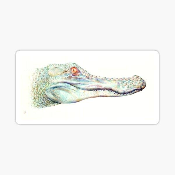 Albino Alligator Sticker