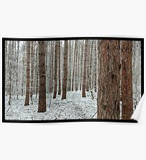 April snowstorm on pines Poster