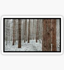 April snowstorm on pines Sticker
