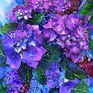Wild Hydrangeas by Carol  Cavalaris