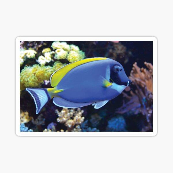 Blauer Fisch vor Korallen Sticker