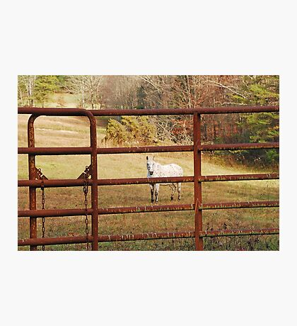 Don't Fence Me In Photographic Print