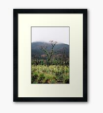 Regrowth in the Mist Framed Print