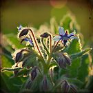 The Beauty of Weeds by VictoriaHerrera