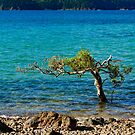 A Tree in the Sea by Adam Calaitzis