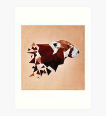 Red Panda II Kunstdruck