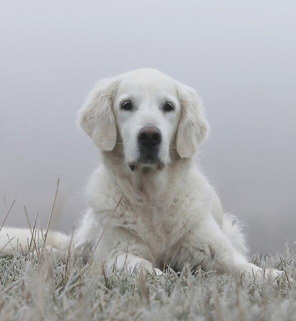 Foggy morning portrait by Trine