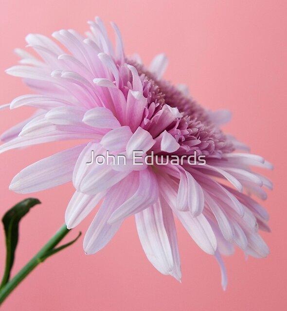 Pink on Pink by John Edwards