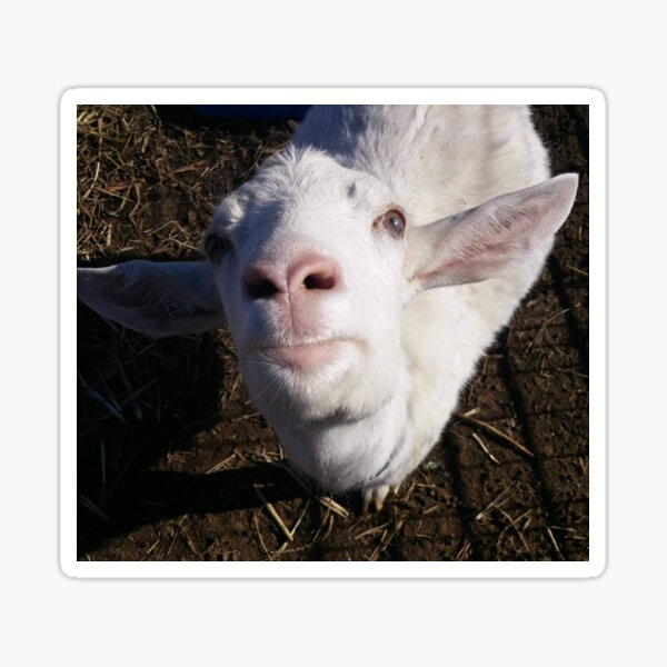 Tina the Goat Sticker