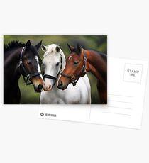 Drei Freunde Postkarten