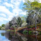 Azaleas at Rice Mill Pond by Catherine Sherman