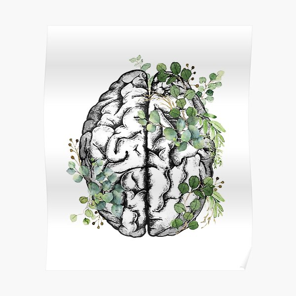 Human brain with green leaver eucaliptus, watercolor style Poster