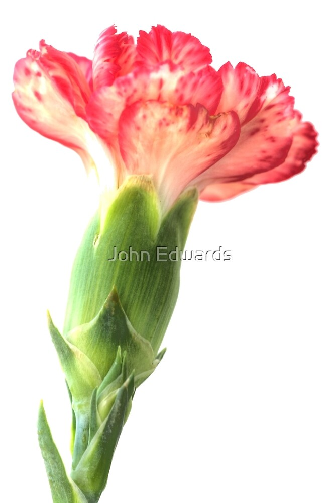 Pink on top by John Edwards