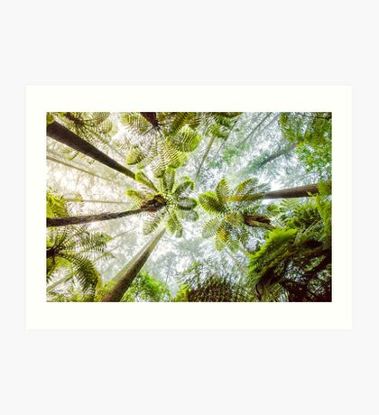 Morning Forest Fog - Redwoods, Whakarewarewa Art Print