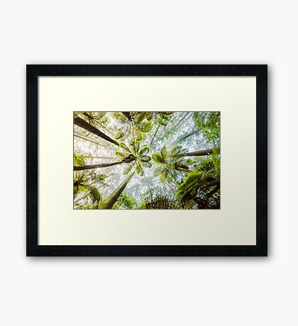 Morning Forest Fog - Redwoods, Whakarewarewa Framed Print
