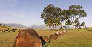 Kūkaniloko Birthstones State Monument .2 by Alex Preiss