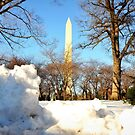 Winter in DC by MEV Photographs