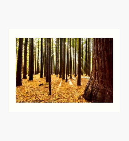 Beams & Trees Art Print