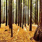 Beams & Trees by SeeOneSoul
