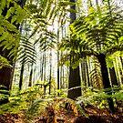 Whakarewarewa Forest by SeeOneSoul