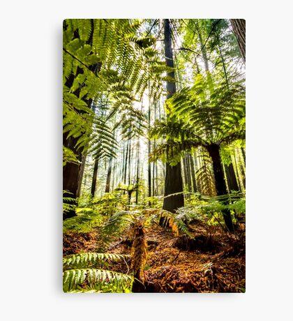 Whakarewarewa Forest Canvas Print