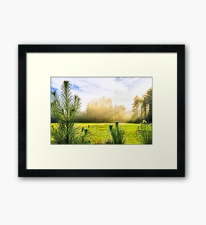 Early Morning Country Walk Framed Print