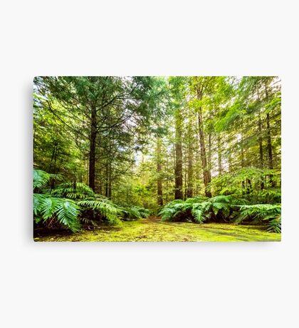 Green Wonderland of Whakarewarewa Forest Canvas Print