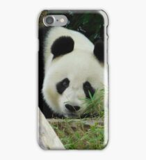 Wang Wang the panda iPhone Case/Skin