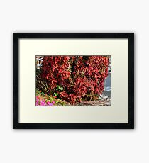 Beautiful colorful bush with red leaves. Framed Print