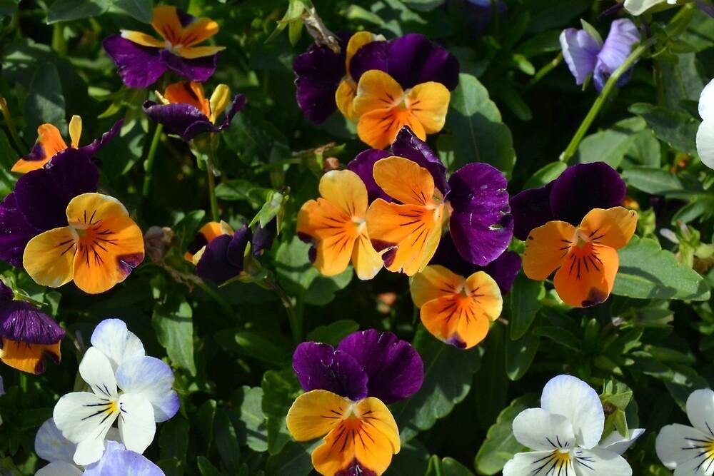 Colorful orange and purple flowers background. by oanaunciuleanu