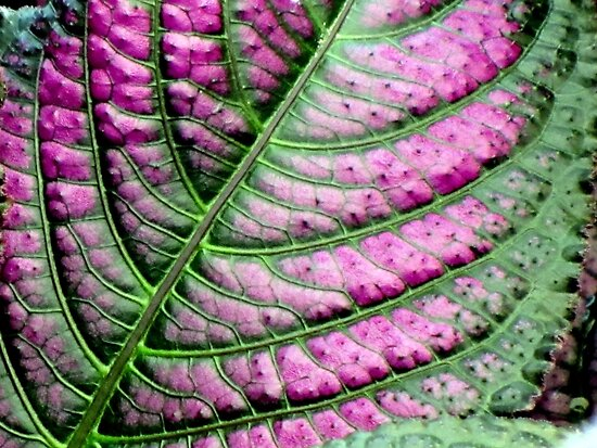 Iridescent Colorful Leaf by Jean Gregory  Evans
