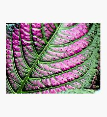 Iridescent Colorful Leaf Photographic Print