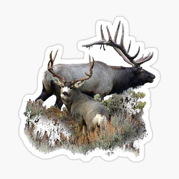 Bull elk and mule deer buck Sticker