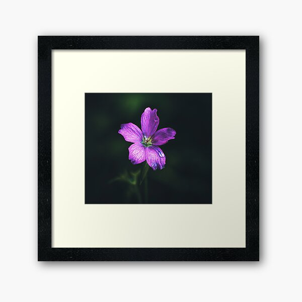 In a different light Framed Art Print