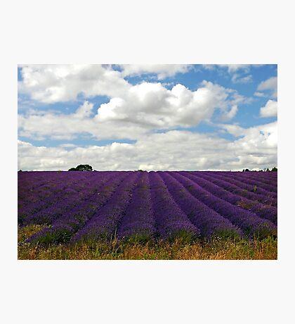 Lavender Landscape (Version 2) Photographic Print