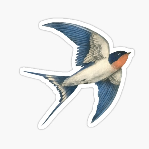 Barn Swallow - option Sticker