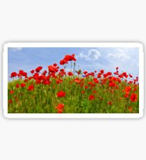 Field of Poppies | panoramic view Sticker