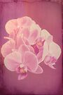 Photo art antiqued pink orchid by Hugh McKean