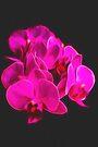 Photo art pink orchid by Hugh McKean