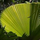 Fan Plant by Imagery