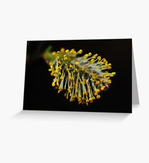 April Flowers Greeting Card